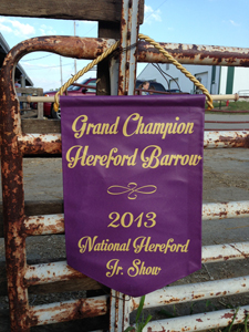 2013 Champion Hereford Barrow