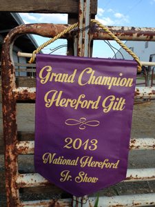 2013 Champion Hereford Gilt