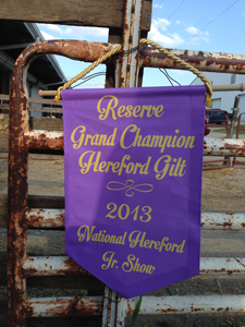 2013 Reserve Champion Hereford Gilt